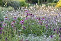 Echinacea purpurea 'Magnus', Penstemon 'Raven', Geranium 'Dreamland', Gaura lindheimeri