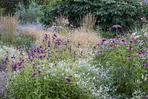 Echinacea purpurea 'Magnus', Penstemon 'Raven', Geranium 'Dreamland', Deschampsia cespitosa, Calamagrostis x acutiflora 'Karl Foerster'