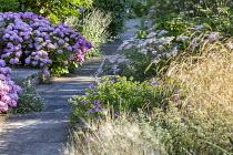Deschampsia cespitosa, Geranium 'Rozanne', Achillea 'Pretty Belinda', Hordeum jubatum, Hydrangea macrophylla