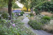Anemone hupehensis 'Hadspen Abundance', Achillea 'Pretty Belinda', Geranium 'Dreamland', Erigeron karvinskianus edging path, Perovskia atriplicifolia