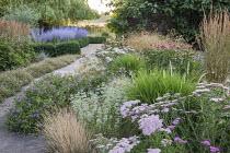 Achillea 'Pretty Belinda', Geranium 'Dreamland', Erigeron karvinskianus edging path, Perovskia atriplicifolia, Echinacea purpurea 'Magnus', Origanum vulgare subsp. hirtum
