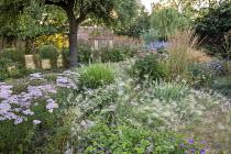 Hordeum jubatum, Achillea 'Pretty Belinda', Geranium 'Dreamland', Echinacea purpurea 'Magnus'