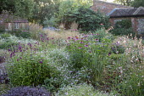 Penstemon 'Raven', Geranium 'Dreamland', Echinacea purpurea 'Magnus', Gaura lindheimeri