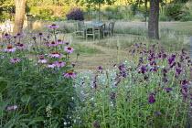 Penstemon 'Raven', Echinacea purpurea 'Magnus', Geranium 'Dreamland'
