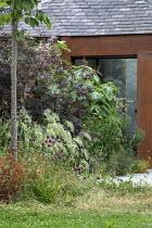 Cotinus 'Grace', Ficus carica, Calamagrostis emodensis, alliums