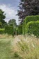 Prunus lusitanica hedge, long grass meadow