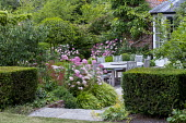 Clipped yew cubes, Hydrangea arborescens 'Invincibelle Spirit' syn. 'Pink Annabelle' around wooden table and chairs on patio, Hakonechloa macra, Persicaria amplexicaulis 'Orange Field'