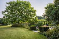 Long grass meadow beneath Catalpa bignonioides, mown lawn, clipped box cubes