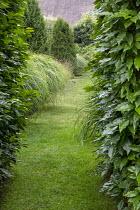 Prunus lusitanica hedge, grass path, Miscanthus sinensis 'Yakushima Dwarf'