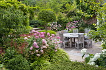 Hydrangea arborescens 'Invincibelle Spirit' syn. 'Pink Annabelle' around wooden table and chairs on patio, Hakonechloa macra, Persicaria amplexicaulis 'Orange Field', multi-stemmed Osmanthus aquifoliu...