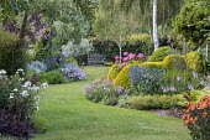 View across curving lawn in cottage garden towards bench, Rosa 'Kent', Eryngium × zabelii 'Big Blue', Hydrangea arborescens 'Pink Annabelle', Clematis 'Comtesse de Bouchaud' climbing in tree, Phlox p...