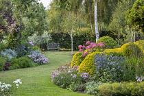 View across curving lawn in cottage garden towards bench, eryngium, Hydrangea arborescens 'Pink Annabelle', Clematis 'Comtesse de Bouchaud' climbing in tree, Phlox paniculata 'Charlotte', Saponaria x...