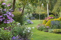 View across curving lawn in cottage garden towards bench, Rosa 'Kent', Eryngium × zabelii 'Big Blue', Hydrangea arborescens 'Pink Annabelle', clematis, Saponaria x lempergii 'Max Frei'