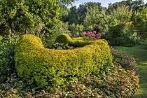 Ligustrum ovalifolium 'Lemon and Lime', Houttuynia cordata 'Chameleon', Hydrangea arborescens 'Pink Annabelle'