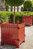 Red painted boxes, lollipop trained Taxus baccata standards in Versailles case