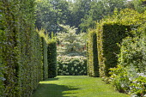 Lawn between hornbeam hedges, hydrangea, Cornus controversa 'Variegata'