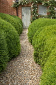 Gravel path through cloud-pruned Buxus sempervirens hedges leading to doorway, roses climbing on wall around entrance