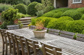 Wooden table and chairs by Gaze Burvill on stone patio, cloud-pruned Buxus sempervirens, clipped hornbeam domes, succulents in pot