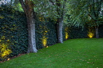 Ivy screen, astroturf lawn