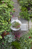 Table and chairs on exotic garden patio, succulents in pots, hedychium, Salvia involucrata 'Bethellii', dahlia, Cordyline 'Pink Passion', Solenostemon 'Pink Chaos', angelonia, Begonia 'Gryphon', sage