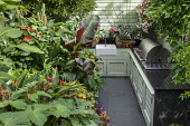 Outdoor kitchen in exotic courtyard, Hedychium densiflorum 'Stephen', Ensete ventricosum 'Maurelii', dahlia, Begonia 'Million Kisses Elegance'