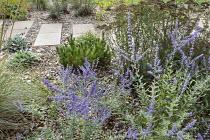 Stepping stone path across gravel border, Pinus mugo 'Mops', Stachys byzantina, Perovskia atriplicifolia 'Blue Spire'