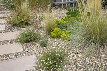 Stepping stone path across gravel border, Erigeron karvinskianus, Stipa tenuissima, Euphorbia seguieriana, Stipa gigantea, Stipa tenuissima