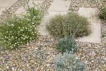 Stepping stone path across gravel border, Erigeron karvinskianus, Lavandula angustifolia 'Hidcote'