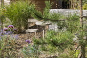 Wooden table and chair on gravel terrace, Pinus nigra