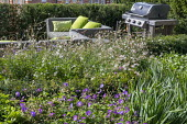 Gaura lindheimeri, Geranium 'Rozanne', Pittosporum tobira 'Nanum', outdoor sofas with cushions on patio, outdoor grill