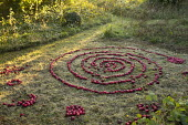 Spiral of apples arranged on lawn