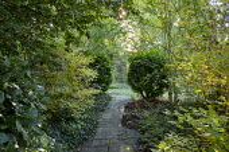 Stone path, Prunus laurocerasus, ivy groundcover, cornus