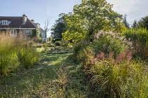 Miscanthus sinensis, Catalpa bignonioides, mown grass paths, long grass meadow