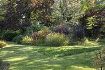 Miscanthus sinensis, shrub border with berberis and viburnum, mown lawn paths