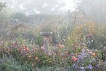 Stone bird bath in border, Rosa 'Lady Emma Hamilton', Nepeta racemosa 'Walker's Low', aster, rudbeckia, Verbena bonariensis