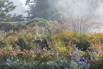 Stone bird bath in border, Rosa 'Lady Emma Hamilton', Nepeta racemosa 'Walker's Low', aster, rudbeckia