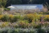 Gaura lindheimeri, rudbeckia, Rosa 'Queen of Sweden', Nepeta racemosa 'Walker's Low', Verbena bonariensis, aster, umbrella, greenhouse