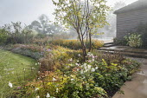Prunus serrula, Anemone x hybrida 'Honorine Jobert', Anemone x hybrida 'September Charm', Rosa 'Queen of Sweden', Nepeta racemosa 'Walker's Low'