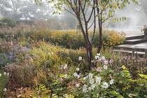 Prunus serrula, Anemone x hybrida 'Honorine Jobert', acanthus seedheads,  Anemone x hybrida 'September Charm', Rosa 'Queen of Sweden'