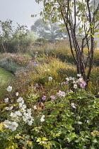 Prunus serrula, Anemone x hybrida 'Honorine Jobert', Anemone x hybrida 'September Charm', Rosa 'Queen of Sweden'