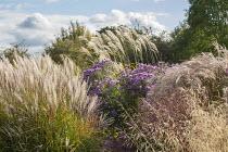 Deschampsia cespitosa 'Bronzeschleier', Panicum virgatum 'Red Cloud', Symphyotrichum novae-angliae 'Purple Cloud', Miscanthus sinensis 'Gnome'