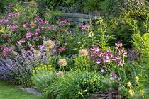 Alliums, Iris 'Sing a Song', Nepeta racemosa 'Walker's Low', Rosa 'Mozart', sedum, euphorbia