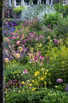 Aquilegia chrysantha, Rosa 'Mozart', Iris 'Sing a Song', alliums, Nepeta racemosa 'Walker's Low', Crambe cordifolia