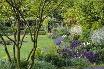 Multi-stemmed amelanchier, Nepeta racemosa 'Walker's Low', Salvia nemorosa 'Caradonna', Paeonia lactiflora 'Jan van Leeuwen', Crambe cordifolia, view across lawn to rose arbour