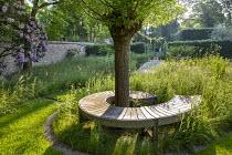 Spiral wooden bench by Gaze Burvill around pollarded willow tree, Achillea millefolium, mown grass path