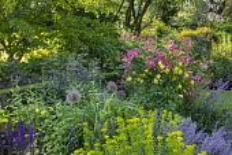 Aquilegia chrysantha, Rosa 'Mozart', Salvia nemorosa 'Caradonna', alliums, euphorbia, Nepeta racemosa 'Walker's Low'