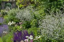 Crambe cordifolia, Nepeta racemosa 'Walker's Low', Salvia nemorosa 'Caradonna', Paeonia lactiflora 'Jan van Leeuwen', alliums, timber and stone pergola