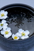 Anemone flowerheads floating in bowl