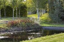 View across pond to avenue of Betula utilis var. jacquemontii, Persicaria amplexicaulis 'Firetail'