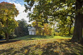 View past oak tree to Temple of Bellona, Cotinus obovatus